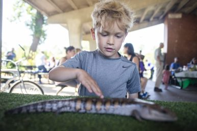 Kids take turns petting different lizards and cold-blooded species on Saturday, Sept. 14, during Meet The Creek event at Kiwanis Park in Brookfield.