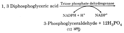 RBSE Solutions for Class 12 Biology Chapter 10 3Q.2.4