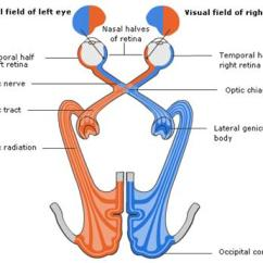 Diagram Of The Left Eye 4 Wire Electric Motor Wiring Initial Assessment Rcemlearning Normal Visual Pathway