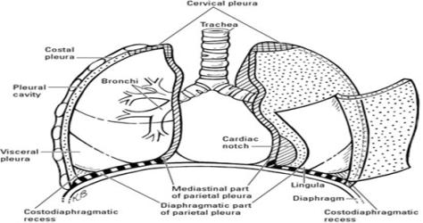 biology words