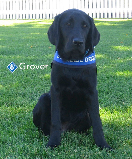 Alberta guide dog services canadian charities.