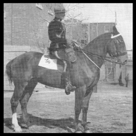 Photograph of RCMP member on horseback with a white Shamrock (Source of photo - Ric Hall's Photo Collection).