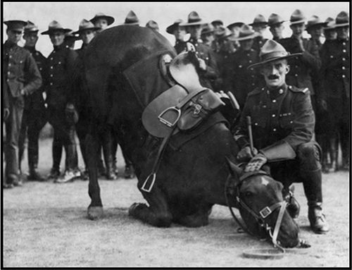 "October 9, 1919 - RNWMP  ""Depot"" Division - photograph of S/Major Tim Griffin with his horse  ""Billy"" (Source of photo - Ric Hall's Photo Collection)."