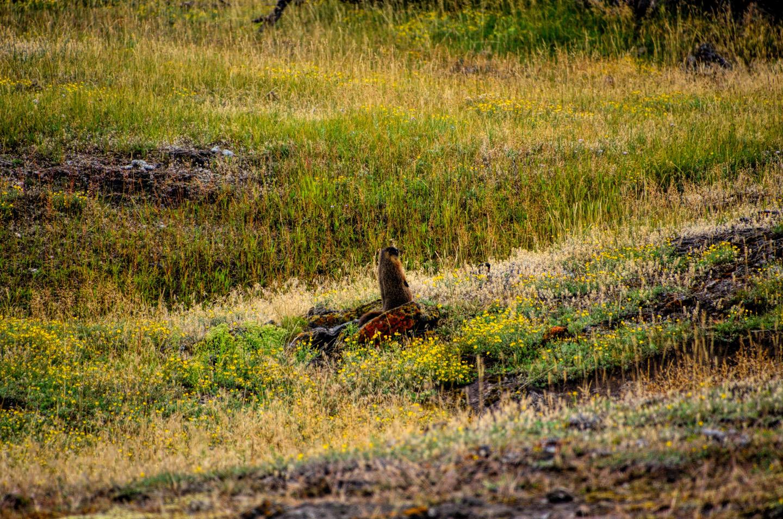 Yellowstone_790-DSC_1120_08-14-2015_093909