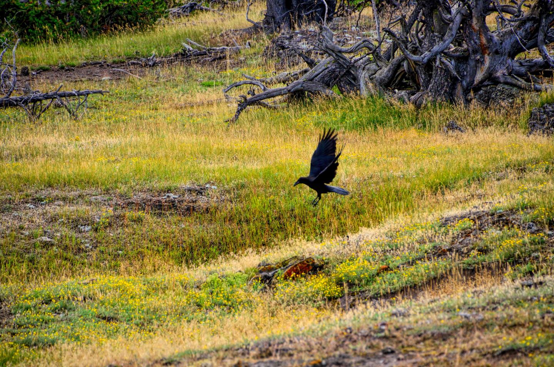 Yellowstone_790-DSC_1133_08-14-2015_094000