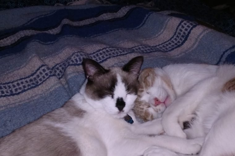 Two cats sleeping on a blue blanket