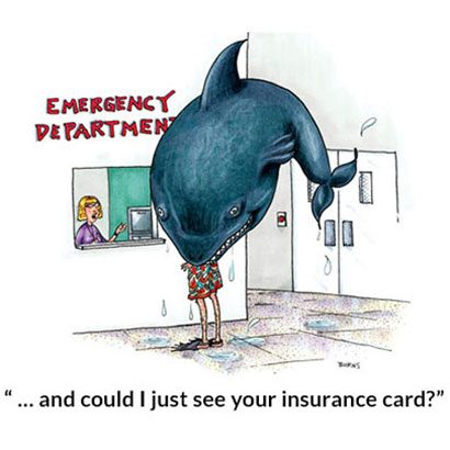 Shark Insurance