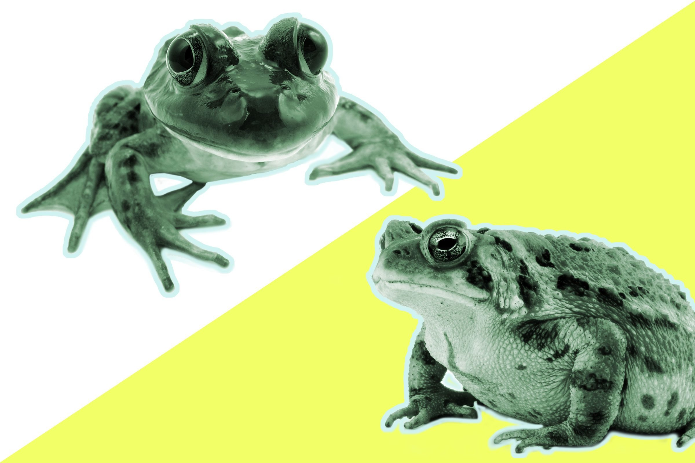 10 Animal Distinctions You Don T Know