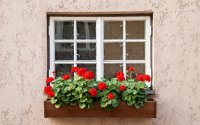 Window Box & Window Boxes Click To Enlarge