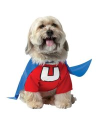 Dog Halloween Costumes: Best Halloween Costumes for Dogs ...