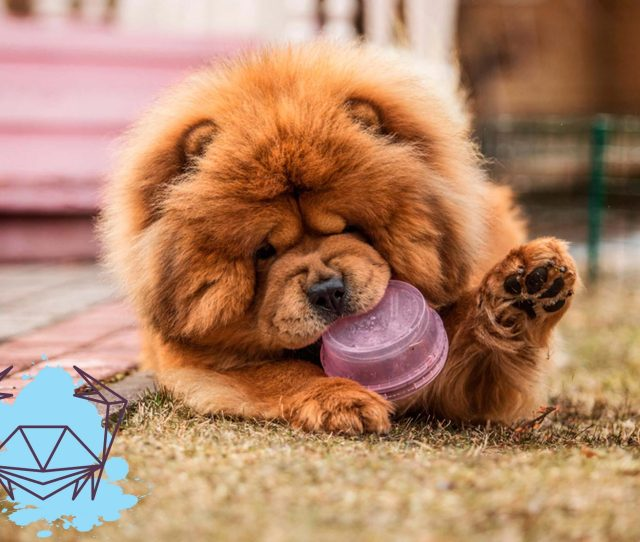 The Dog Breed Thats Most Compatible With Your Zodiac Sign Readers Digest