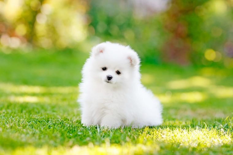 adorable puppy pictures that