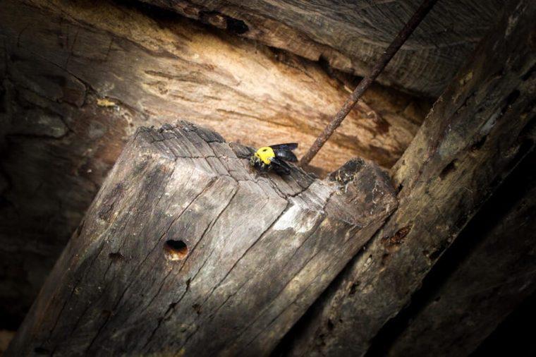 Wood Mites Vs Termites