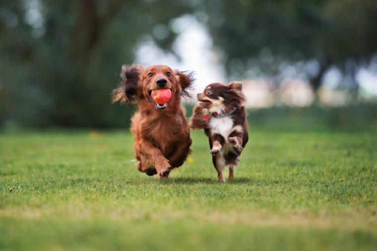 training secrets dog trainers
