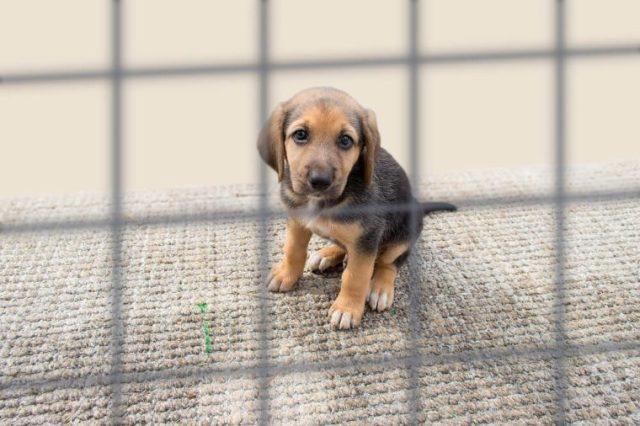 cão triste em uma gaiola na libra