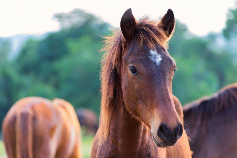 Horse, horses on the farm on a sunny day.