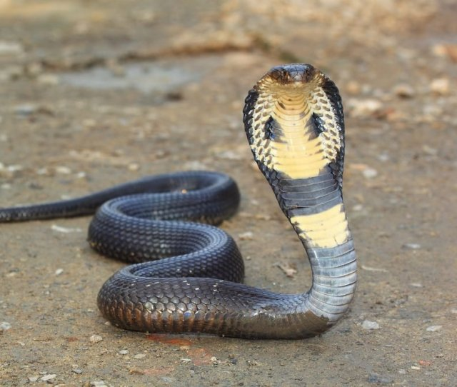 Heres Why There Are So Many Snakes On The Loose Readers Digest