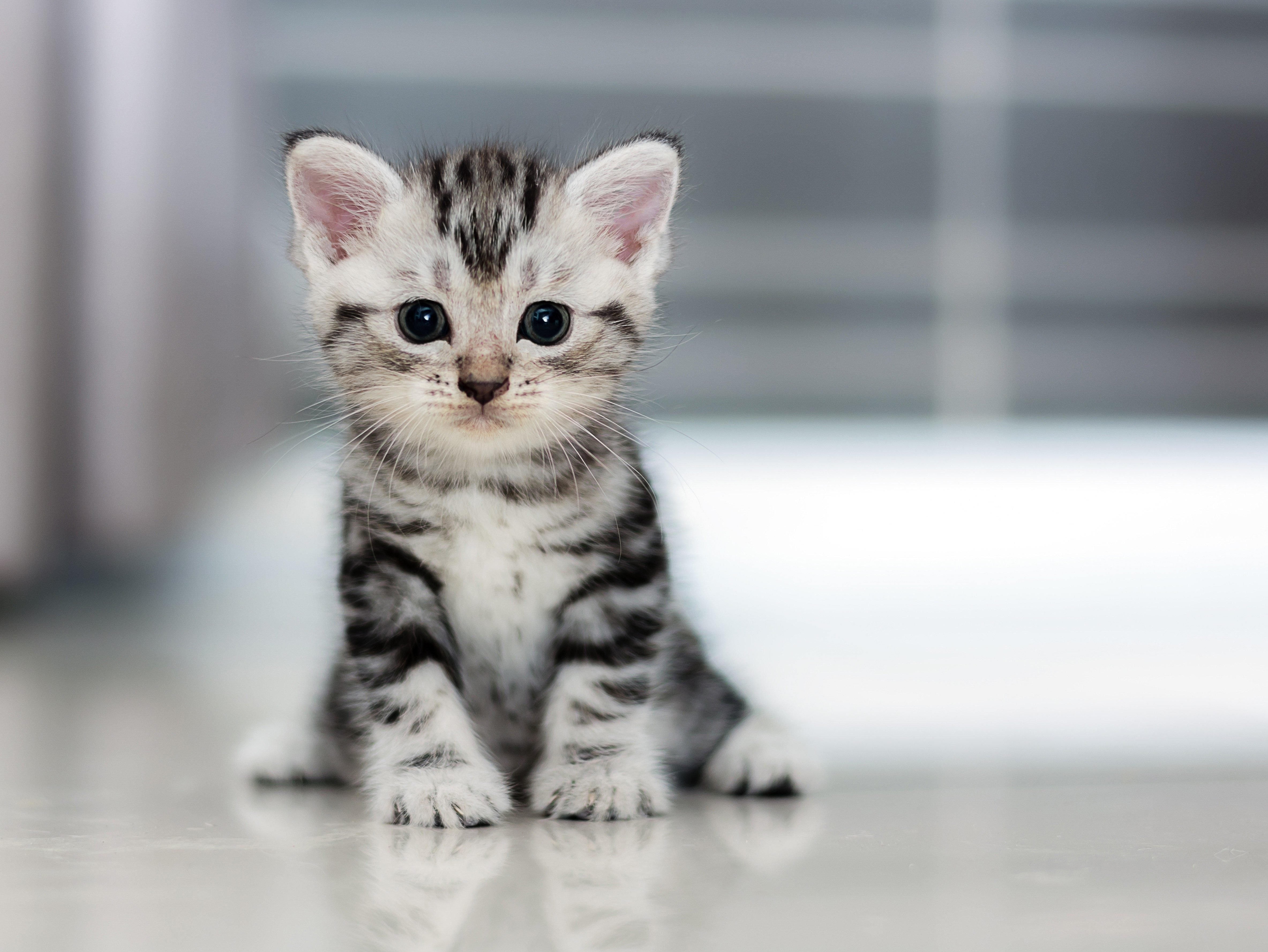 see the cutest cat