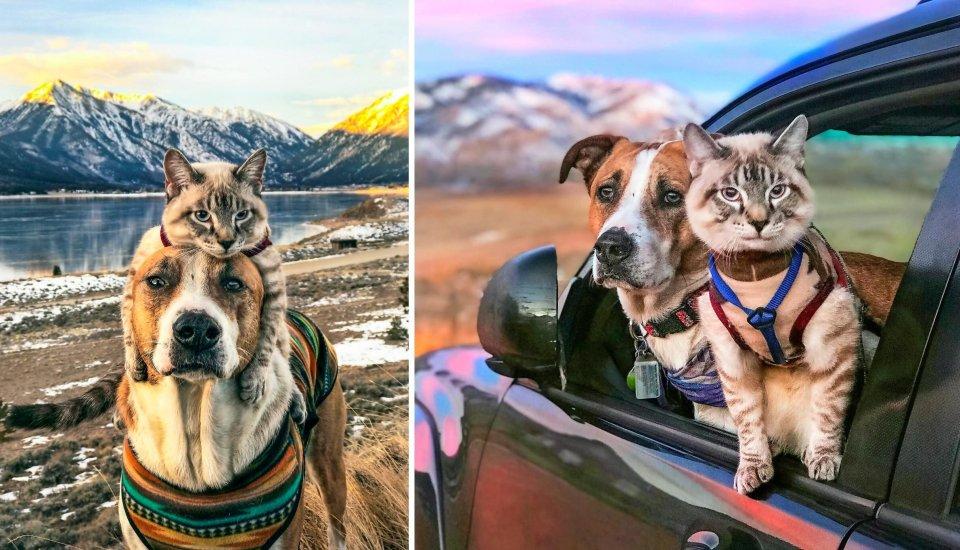 A Feel Good Pet Story