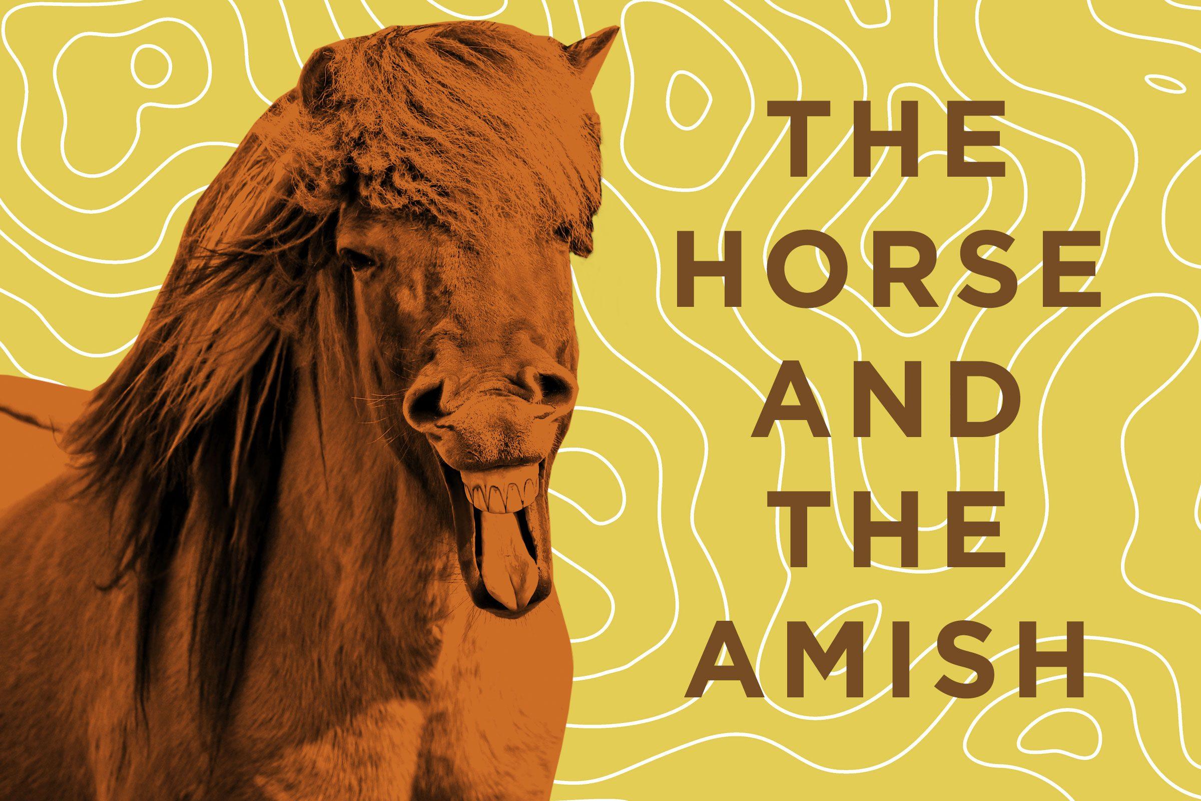 Funny Horse Jokes Readers Digest