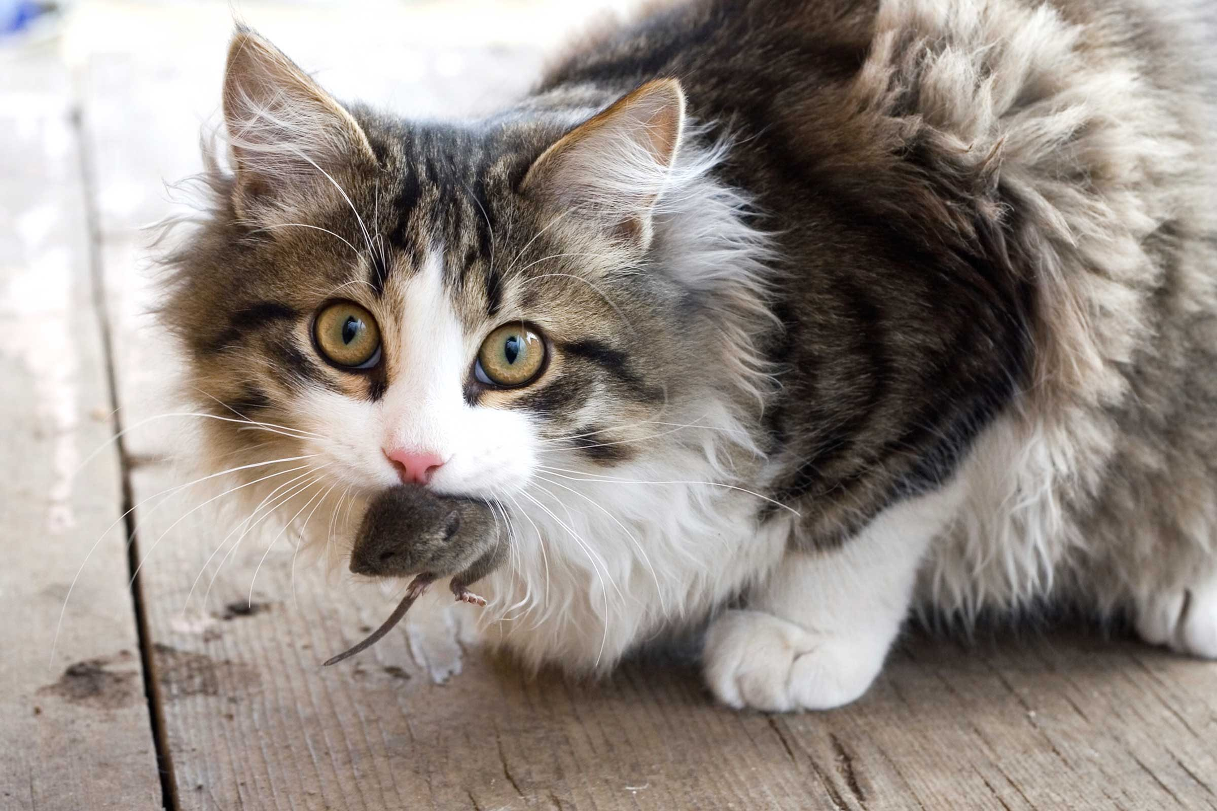 Image result for cat looking disgusted