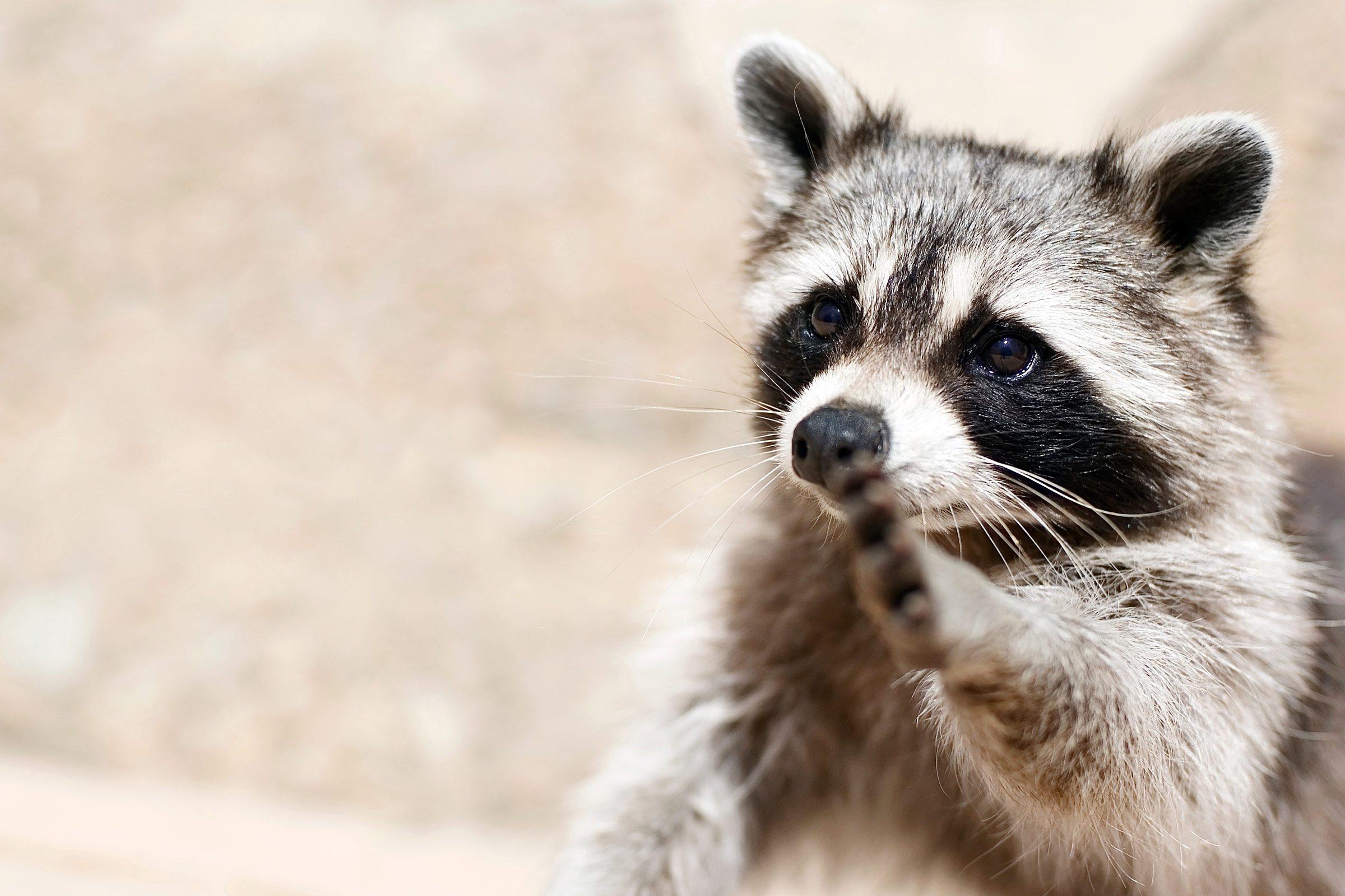 Smartest Animals 8 Species That Are Truly Genius