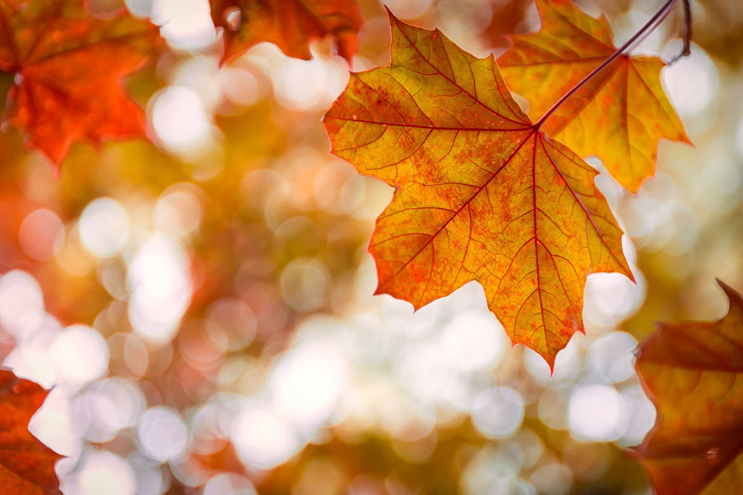 Autumn Falling Leaves Live Wallpaper 21 Mind Blowing Facts About Autumn Reader S Digest