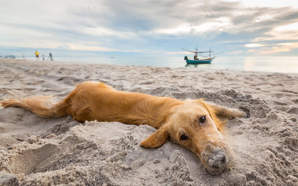 DogFriendly Beaches for You and Your Pooch  Readers Digest