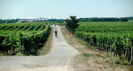 Vineyards in rolling hills.