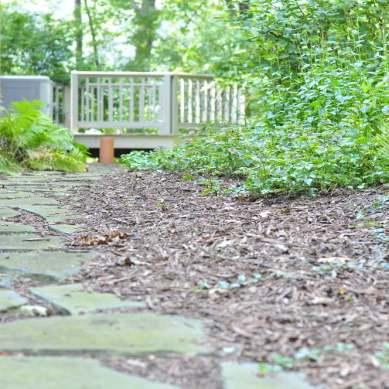Lush Backyard Sanctuary