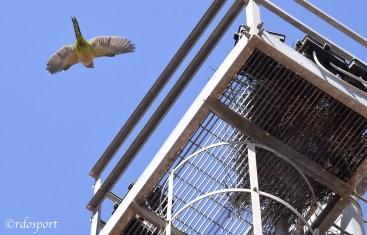 Al Tc Cagliari pappagalli sono di casa