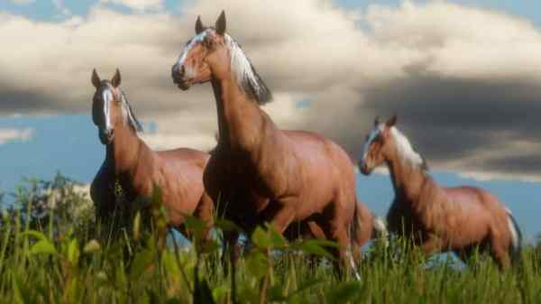 realistic horse breeds # 72