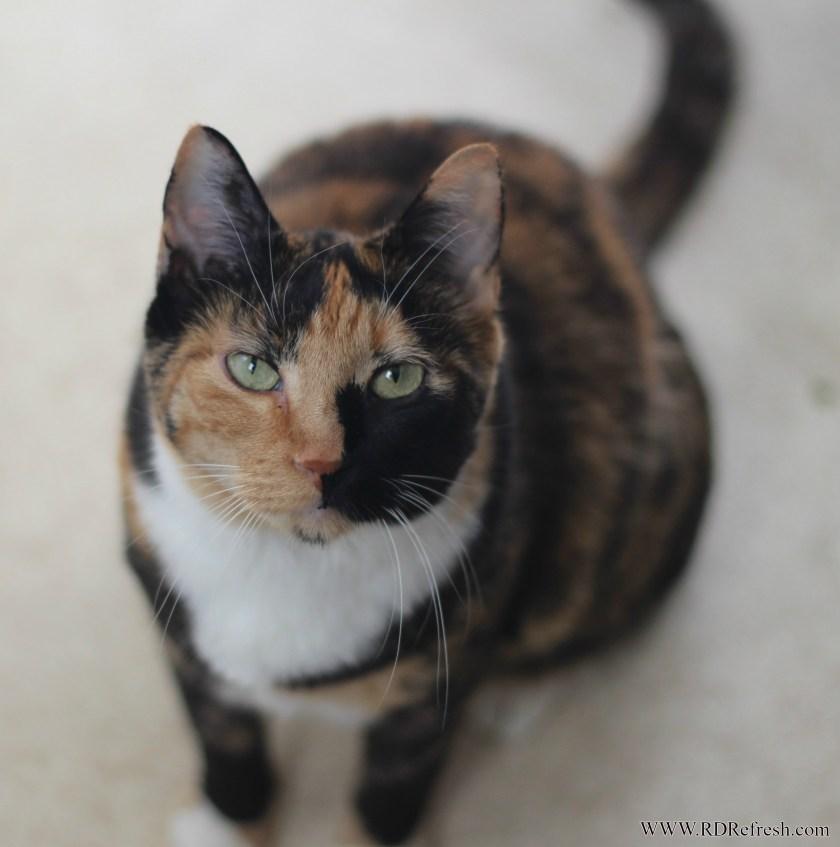 Kitty#1