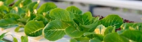 Reaproveitar sobras de vegetais para a compostagem e não só!