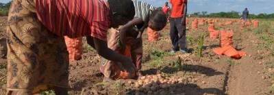Investimento em pequenos agricultores é a melhor maneira de superar a pobreza, aponta relatório da ONU.