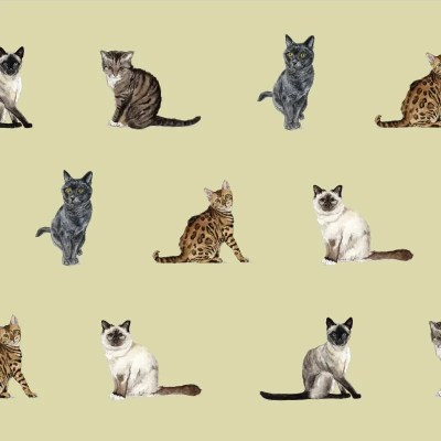 Re-wrapped: ECO Friendly Birthday Wrapping Paper Cat Breeds and Wellington by Sophie Botsford made from 100% Unbleached Recycled Paper