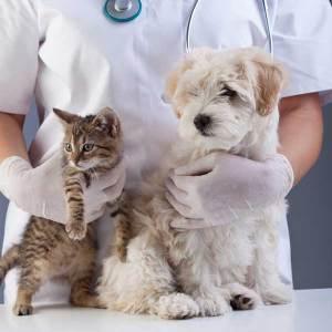 Veterinaro paslaugos