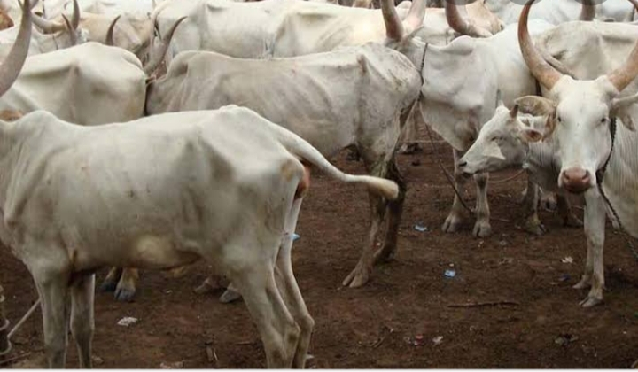 Livestock market remains closed in Akwa Ibom State