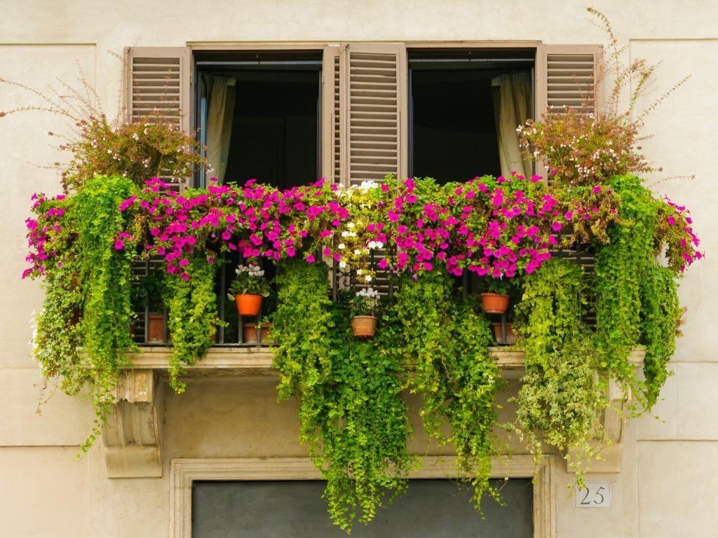 urban landscaping plants