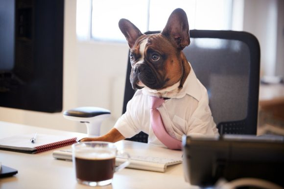 12 Adorable Pictures of Dogs Dressed for Work | Reader's ...