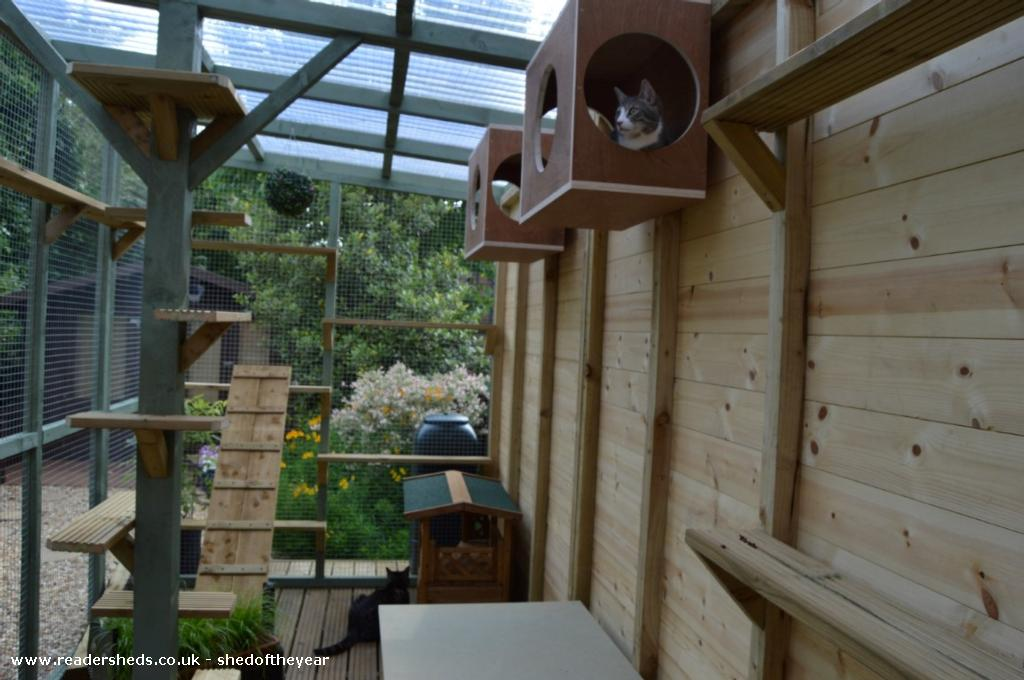 The Catio Shed Unique from Back Garden owned by Rachel B