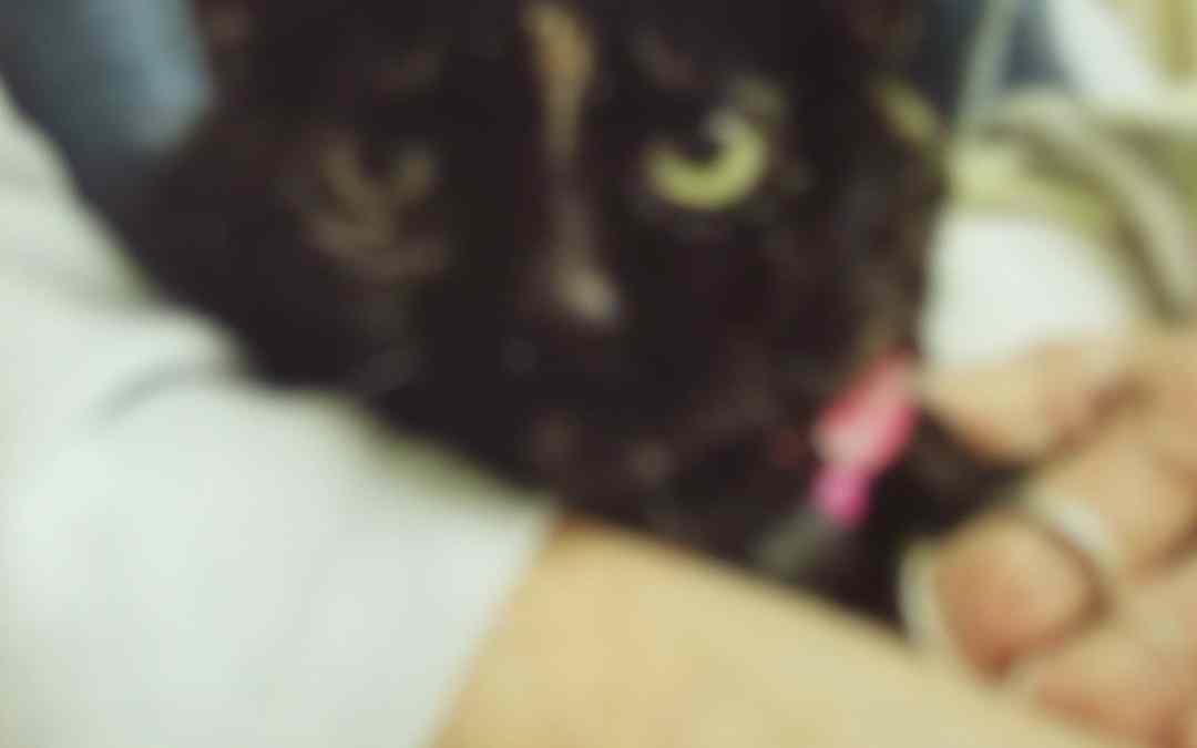 Meet Elvira