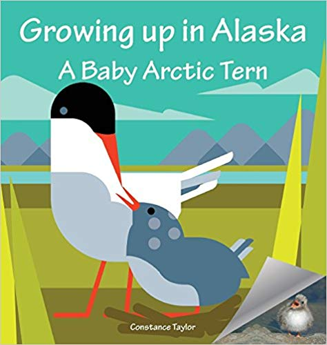 """Growing up in Alaska: A Baby Arctic Tern"" by Constance Taylor"