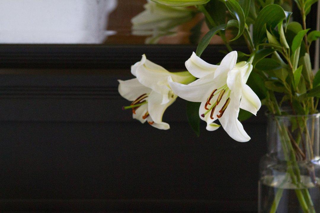 lilies_reading_my_tea_leaves_IMG_2285