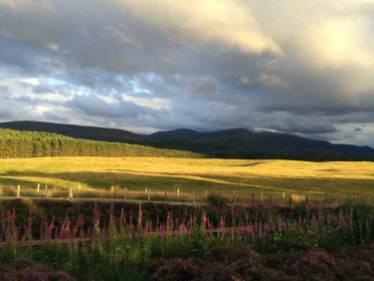 Nach dem Regen erstrahlen die Felder und Blumen in den Grampian Mountains wie frisch gewaschen.