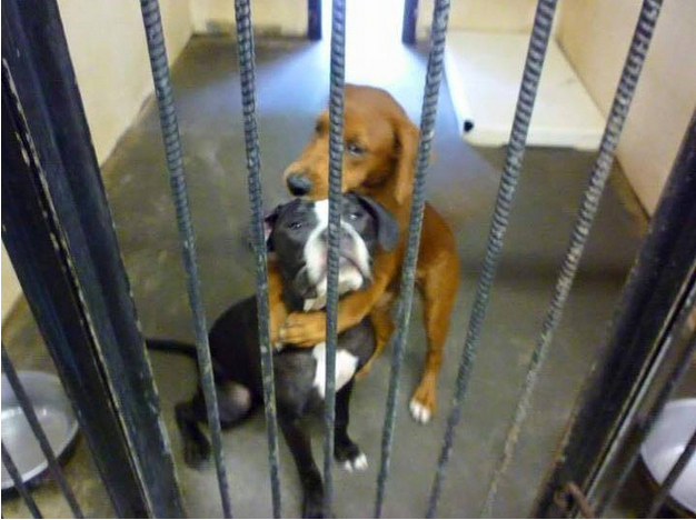 Picture of dogs hugging saves their lives.