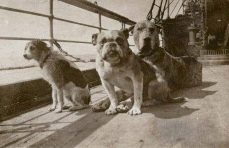 "Четырехлапые жертвы ""Титаника"""