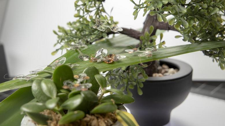 Эластичный робот-насекомое, который выдерживает удар мухобойкой