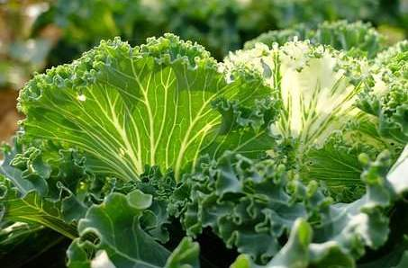 12 Health Benefits of Dark leafy Green Vegetables