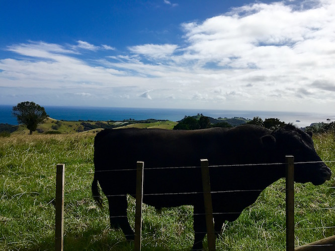 NZ Waiheke Stony Batter 1
